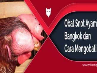 Obat Snot Ayam Bangkokatau Ayam Aduan dan Cara Mengatasinya