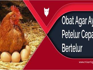 Obat Agar Ayam Petelur Cepat Bertelur