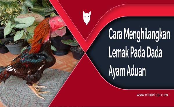 Cara Menghilangkan Lemak Pada Dada Ayam Aduan