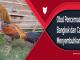 Obat Pencernaan Ayam Bangkok dan Cara Menyembuhkannya